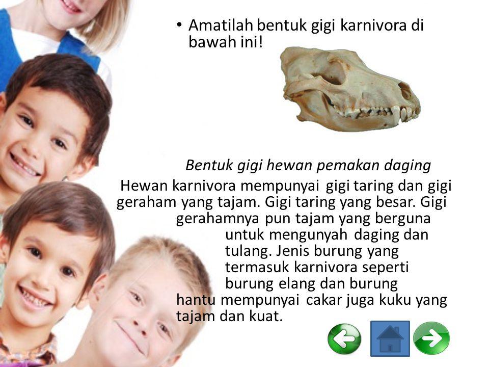 Karnivora Hewan yang memakan hewan lain disebut karnivora. Hewan karnivora yang hidup di sekitar kita seperti anjing dan kucing. Anjing memakan daging