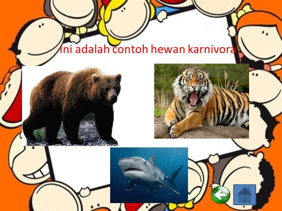 Ciri-ciri hewan karnivora : Punya gigi geraham khusus. Gigi serinya kecil-kecil dan tajam. Punya gigi taring yang panjang, besar dan runcing. Untuk je