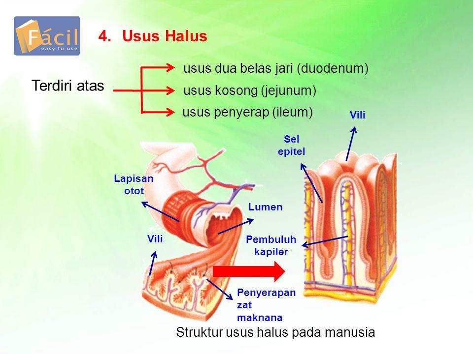 4.Usus Halus Terdiri atas usus dua belas jari (duodenum) usus kosong (jejunum) usus penyerap (ileum) Struktur usus halus pada manusia Lumen Vili Sel e