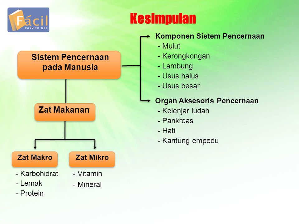 Zat Makanan Kesimpulan Sistem Pencernaan pada Manusia Zat Makro - Karbohidrat - Lemak - Protein Zat Mikro - Vitamin - Mineral Komponen Sistem Pencerna