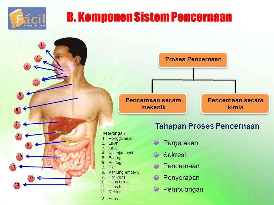 B. Komponen Sistem Pencernaan Proses Pencernaan Pencernaan secara mekanik Pencernaan secara kimia Tahapan Proses Pencernaan Pergerakan Sekresi Pencern