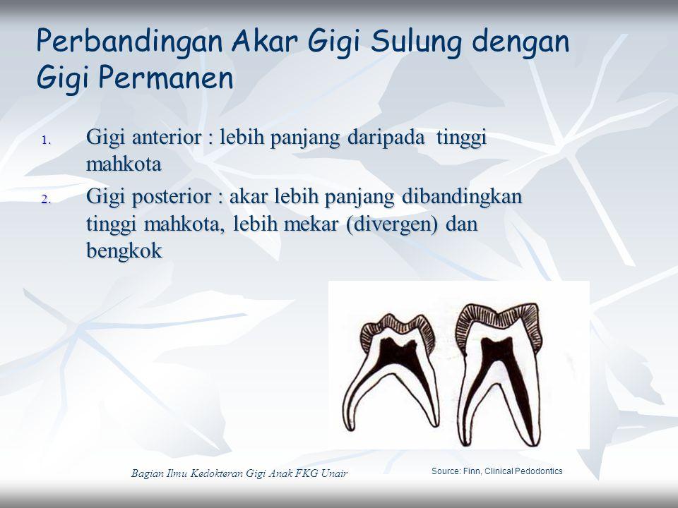 1. Gigi anterior : lebih panjang daripada tinggi mahkota 2. Gigi posterior : akar lebih panjang dibandingkan tinggi mahkota, lebih mekar (divergen) da