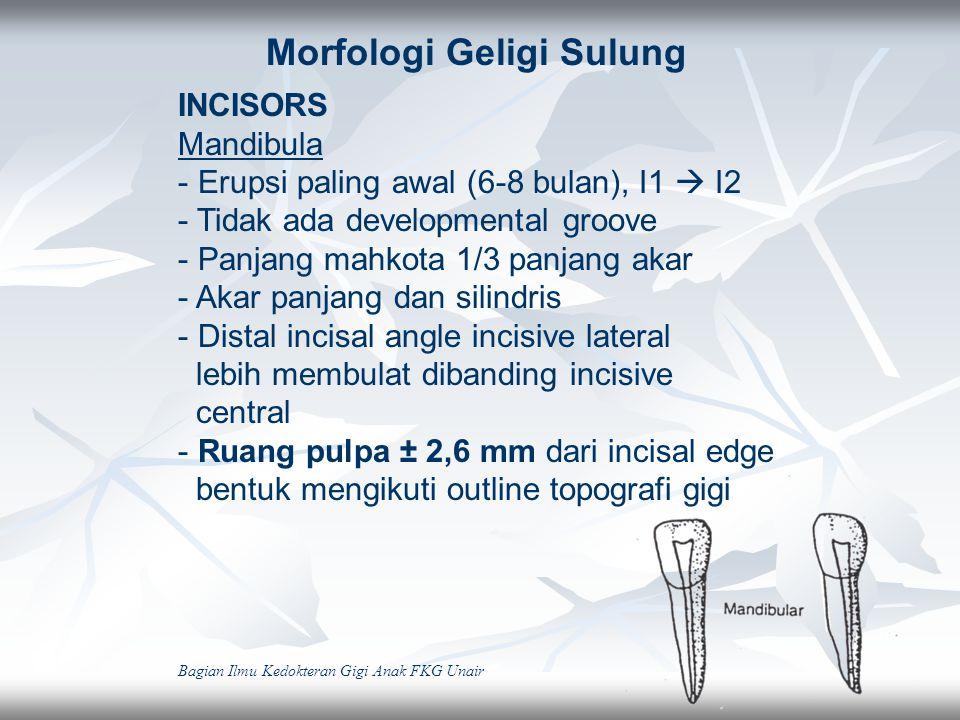 INCISORS Maxilla -Erupsi pada usia ± 7-9 bulan -Dimensi mesio-distal > tinggi mahkota -Permukaan labial datar -Titik kontak dengan gigi sebelah  lebar -Akar konis 2,5 X tinggi mahkota -Ruang pulpa 2,3-2,4 mm dari incisal edge -Lateral incisive tinggi mahkota -Permukaan labial datar -Titik kontak dengan gigi sebelah  lebar -Akar konis 2,5 X tinggi mahkota -Ruang pulpa 2,3-2,4 mm dari incisal edge -Lateral incisive <, disto-incisal edge membulat Bagian Ilmu Kedokteran Gigi Anak FKG Unair