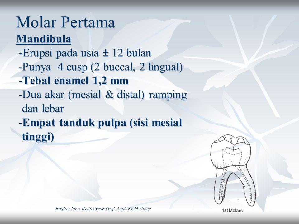 Molar Pertama Maxilla - Erupsi pada usia ± 14 bulan - Mirip molar sekaligus mirip premolar - Punya 4 cusp (mesio dan disto-buccal, mesio dan disto-lingual) - Buccal cervical ridge menonjol - Tanduk pulpa 3 buah di masing-masing cusp (m-1,8 mm; d-2,3 mm ; l-2,0 mm dari puncak cusp) Bagian Ilmu Kedokteran Gigi Anak FKG Unair