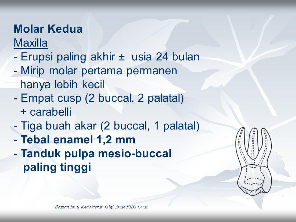 Mandibula - Erupsi pada usia ± 20 bulan - Mirip molar pertama permanen - Lima cusp (3 buccal, 2 lingual) - Tebal enamel 1,2 mm - Dua akar (mesio-distal sempit, bucco lingual lebar) -Tanduk pulpa mesio-buccal paling tinggi Bagian Ilmu Kedokteran Gigi Anak FKG Unair