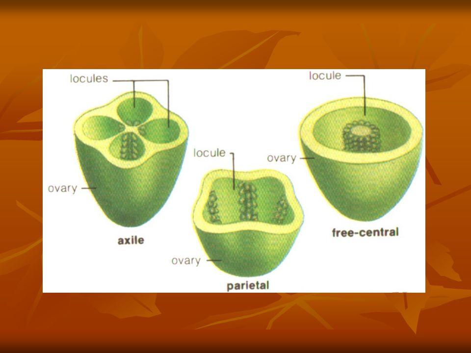 Rumus Bunga Rumus bunga ditunjukkan oleh 4 bagian pokok yaitu : 1.