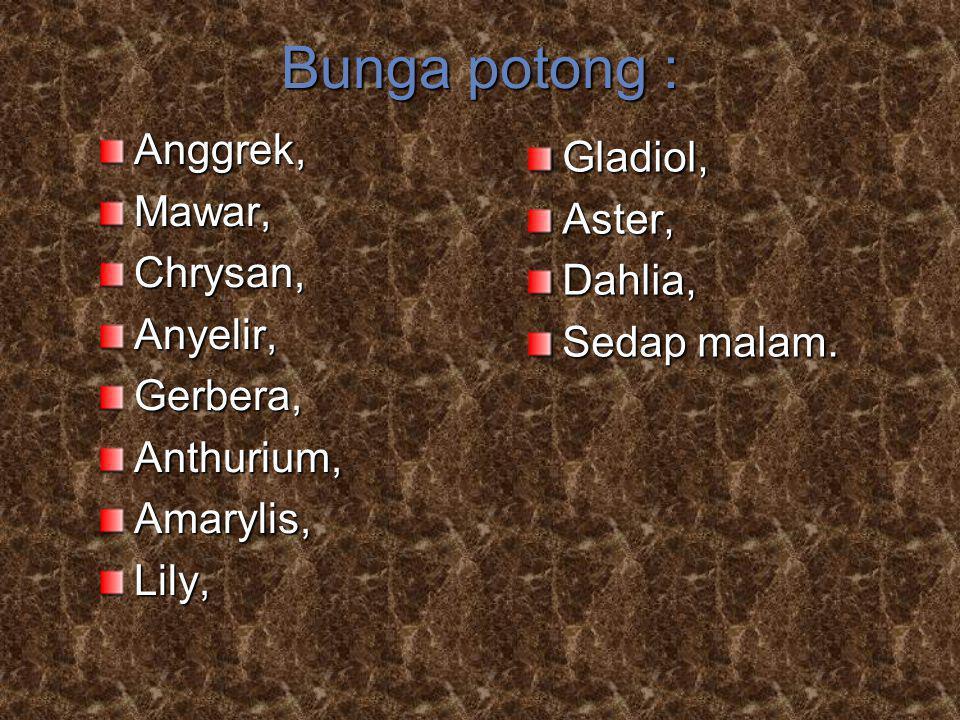 Anggrek,Mawar,Chrysan,Anyelir,Gerbera,Anthurium,Amarylis,Lily, Gladiol,Aster,Dahlia, Sedap malam. Bunga potong :