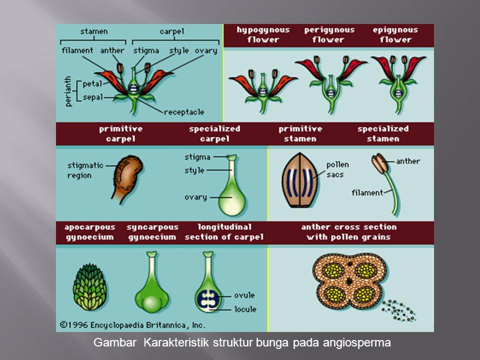 Gambar Karakteristik struktur bunga pada angiosperma