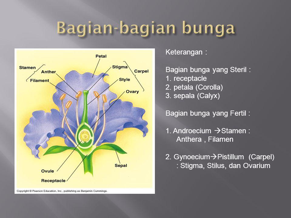 Keterangan : Bagian bunga yang Steril : 1. receptacle 2. petala (Corolla) 3. sepala (Calyx) Bagian bunga yang Fertil : 1. Androecium  Stamen : Anther