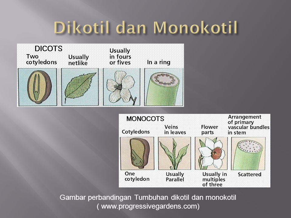 Gambar perbandingan Tumbuhan dikotil dan monokotil ( www.progressivegardens.com)