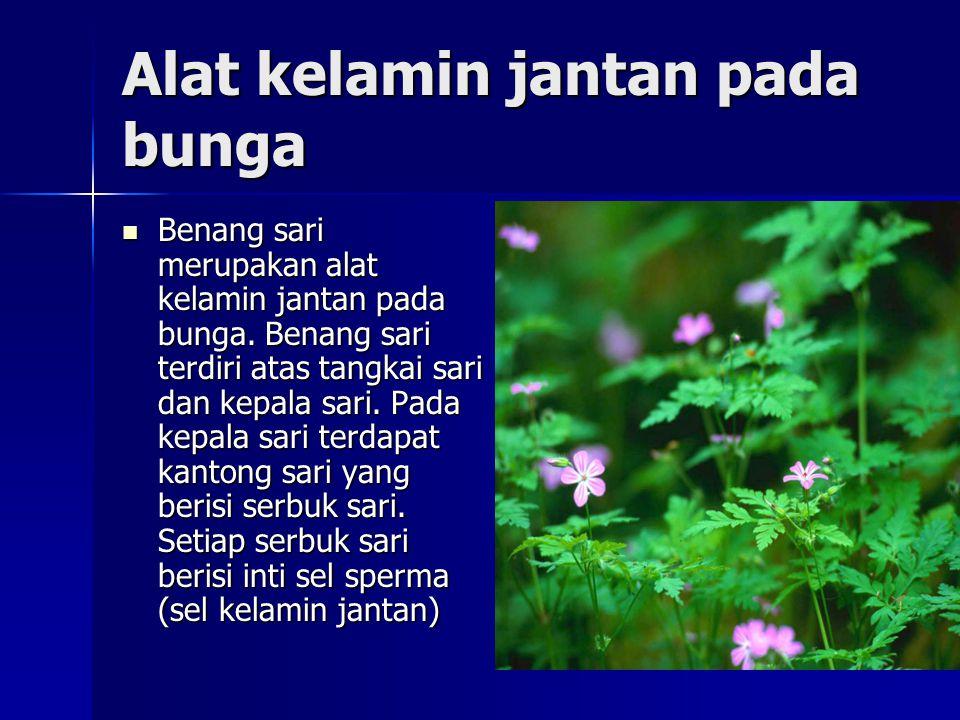 Alat kelamin jantan pada bunga Benang sari merupakan alat kelamin jantan pada bunga. Benang sari terdiri atas tangkai sari dan kepala sari. Pada kepal