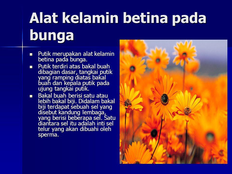 Alat kelamin betina pada bunga Putik merupakan alat kelamin betina pada bunga. Putik merupakan alat kelamin betina pada bunga. Putik terdiri atas baka
