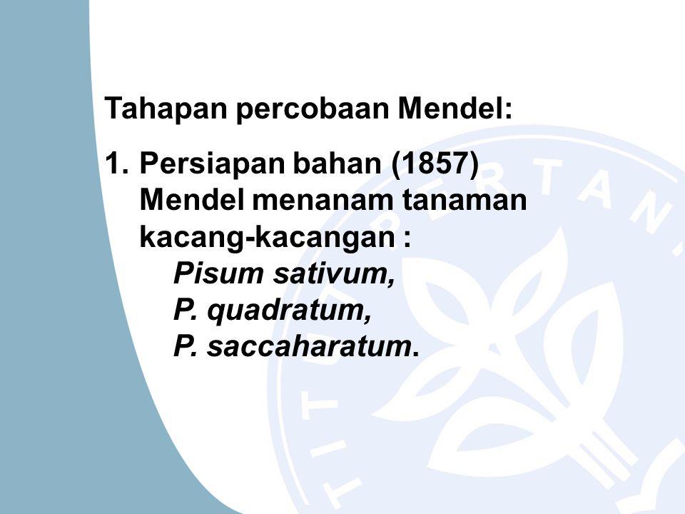 Tahapan percobaan Mendel: 1.Persiapan bahan (1857) Mendel menanam tanaman kacang-kacangan : Pisum sativum, P. quadratum, P. saccaharatum.