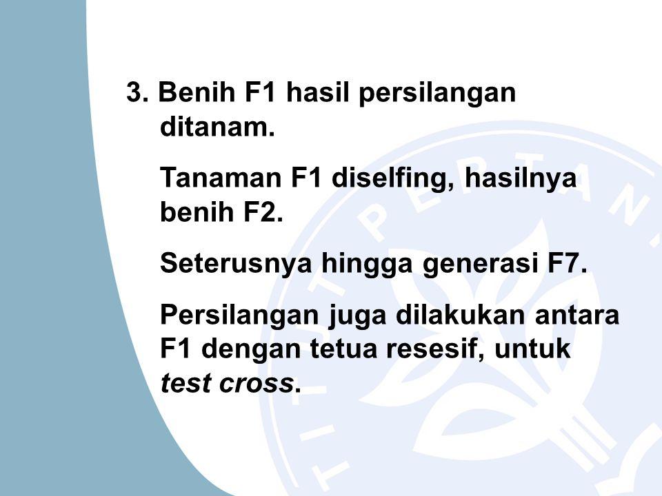 3. Benih F1 hasil persilangan ditanam. Tanaman F1 diselfing, hasilnya benih F2. Seterusnya hingga generasi F7. Persilangan juga dilakukan antara F1 de