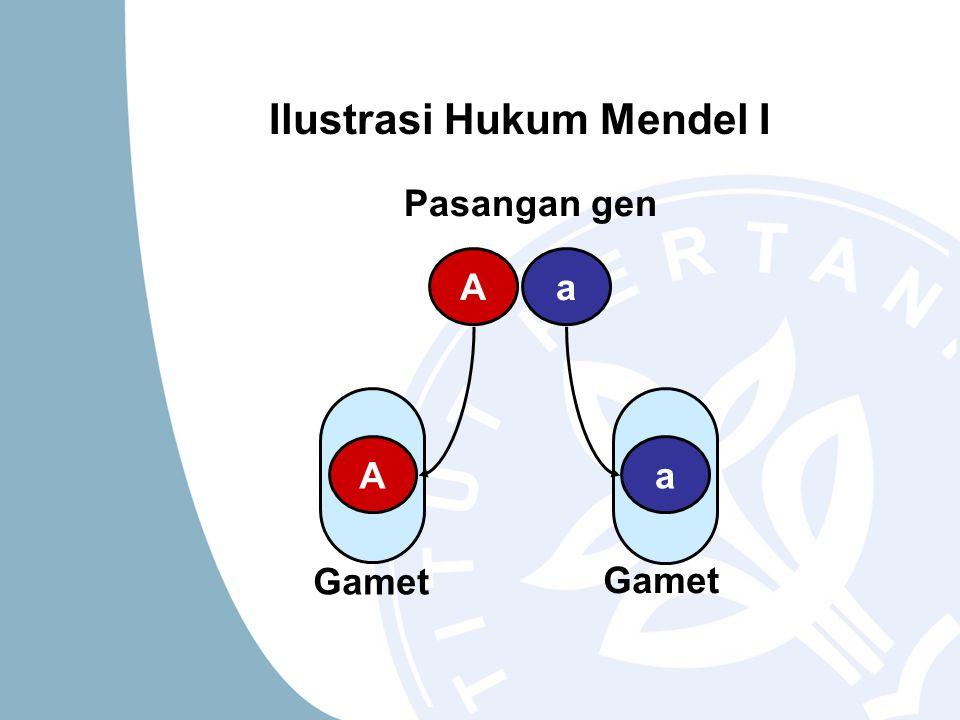 Ilustrasi Hukum Mendel I Gamet Pasangan gen Aa Aa