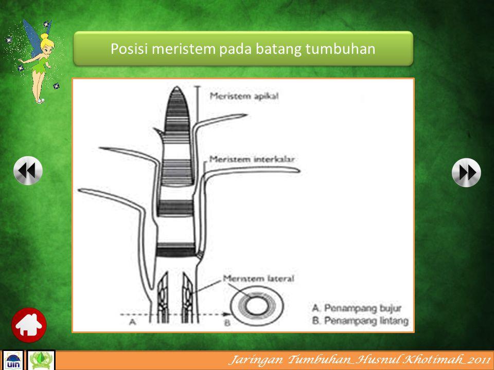 Jaringan Tumbuhan_Husnul Khotimah_2011 Berdasarkan posisinya dalam tubuh tumbuhan, meristem dibagi menjadi : A.Meristem apikal, terdapat di ujung pucuk utama dan pucuk lateral serta ujung akar.