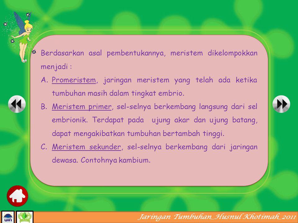 Jaringan Tumbuhan_Husnul Khotimah_2011 Posisi meristem pada batang tumbuhan