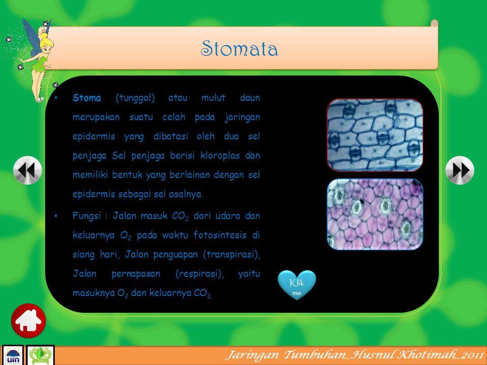 Jaringan Tumbuhan_Husnul Khotimah_2011 Derivat epidermis stomata trikoma spinavelamen sel kipas sel kersik