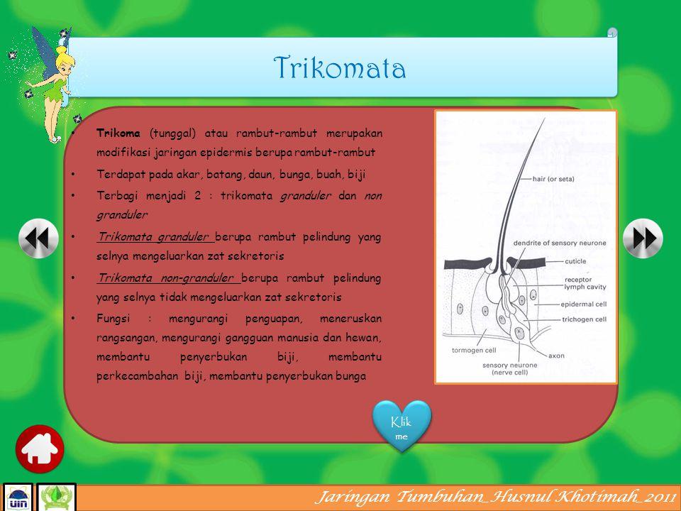 Jaringan Tumbuhan_Husnul Khotimah_2011 Stoma (tunggal) atau mulut daun merupakan suatu celah pada jaringan epidermis yang dibatasi oleh dua sel penjaga Sel penjaga berisi kloroplas dan memiliki bentuk yang berlainan dengan sel epidermis sebagai sel asalnya.