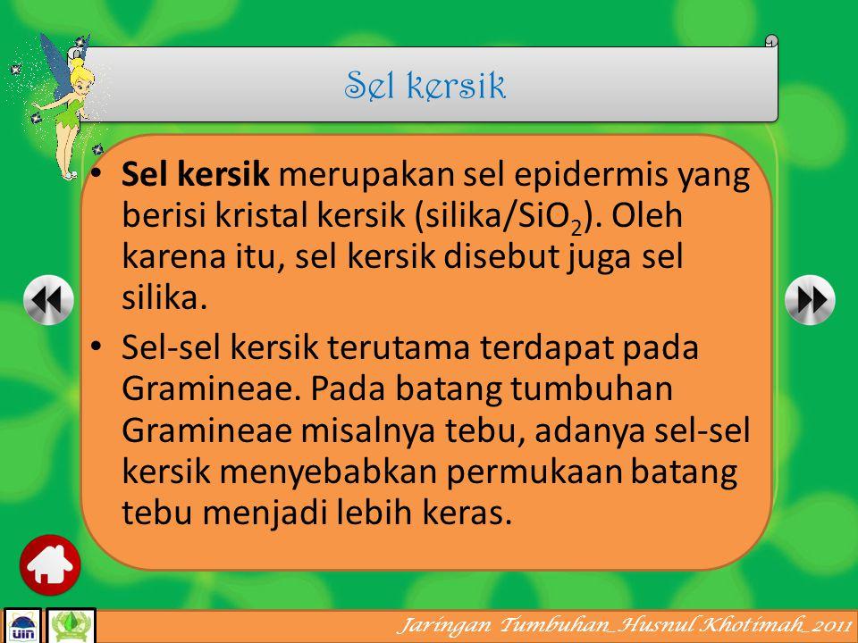 Jaringan Tumbuhan_Husnul Khotimah_2011 Sel kipas disebut juga motor cell atau bulliform cell. Sel kipas merupakan alat tambahan pada epidermis bagian