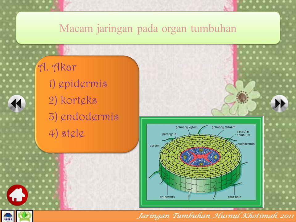 Jaringan Tumbuhan_Husnul Khotimah_2011 Jaringan sekretoris dinamakan juga kelenjar internal karena senyawa yang dihasilkan tidak keluar dari tubuh. Pe