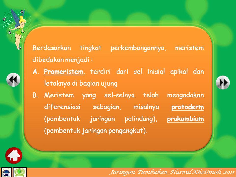 Jaringan Tumbuhan_Husnul Khotimah_2011 Jaringan meristem Tingkat perkembangan Posisi dalam tubuh tumbuhan Asal-usulnya Fungsinya Jaringan dewasa epidermisparenkimVaskulerpenyokongsekretoris Bersifat totipotensi