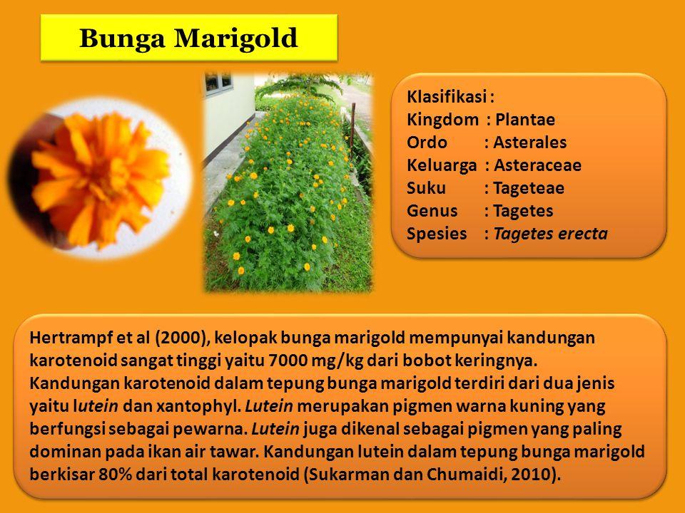 Ikan Mas Koki Warna Bunga Marigold Bahan Kimia (Sintetis) Ikan Mas Koki Dengan Kualitas Warna Bagus LATAR BELAKANG Potensi Ikan Hias Air Tawar Indones