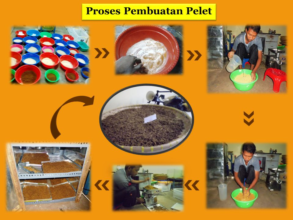 Proses Pembuatan Tepung Bunga Marigold