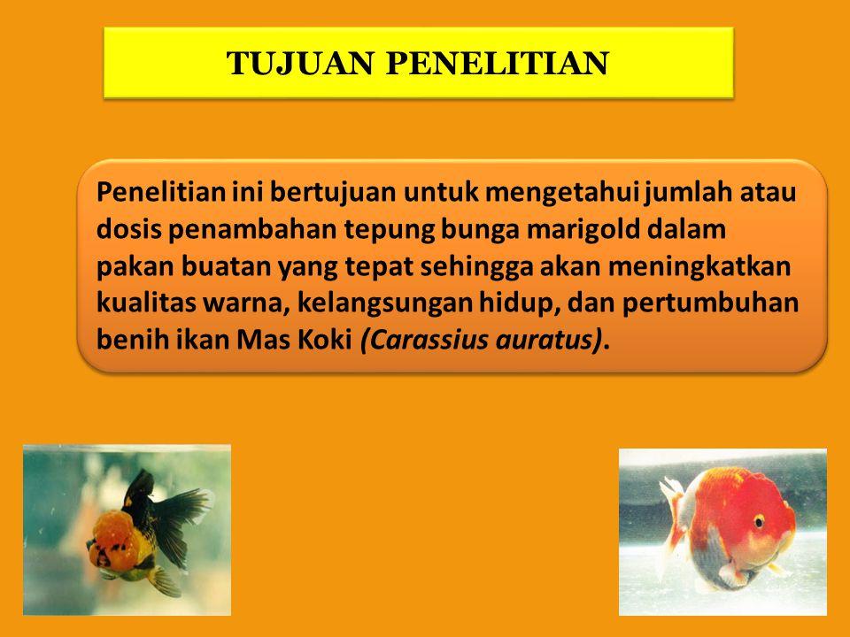 Sejauh mana pengaruh penambahan tepung bunga marigold dalam pakan buatan terhadap kualitas warna, kelangsungan hidup dan pertumbuhan benih ikan Mas Koki (Carassius auratus).