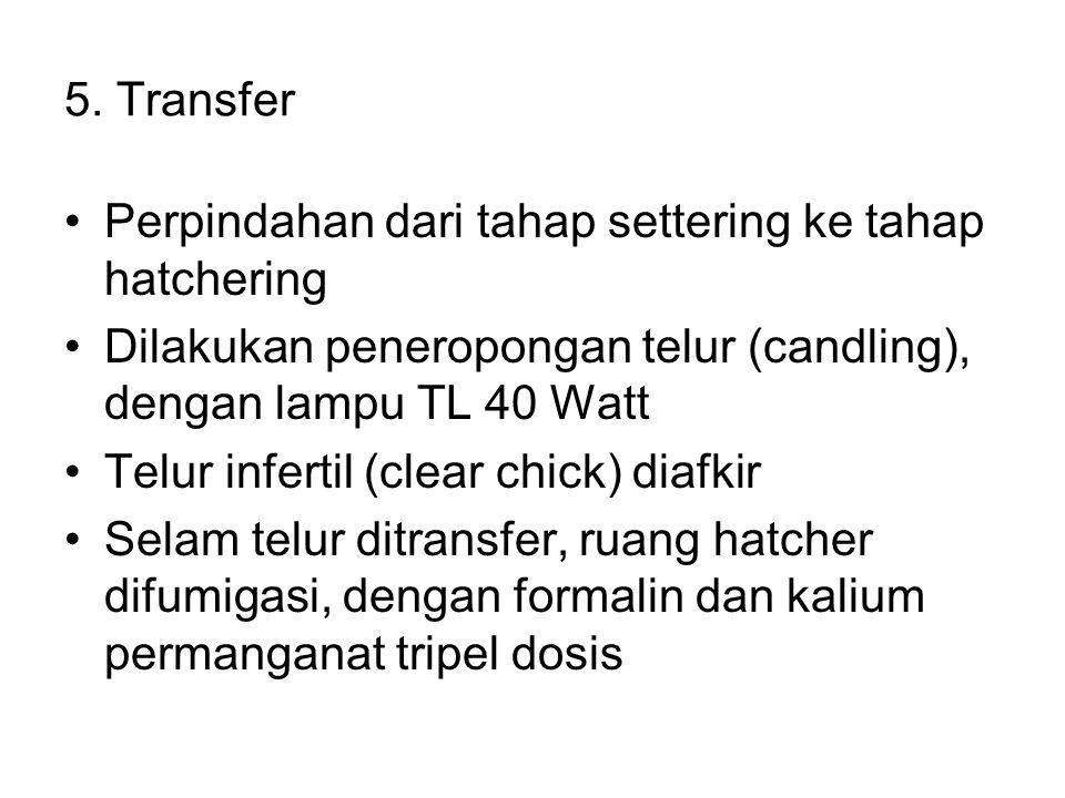 5. Transfer Perpindahan dari tahap settering ke tahap hatchering Dilakukan peneropongan telur (candling), dengan lampu TL 40 Watt Telur infertil (clea