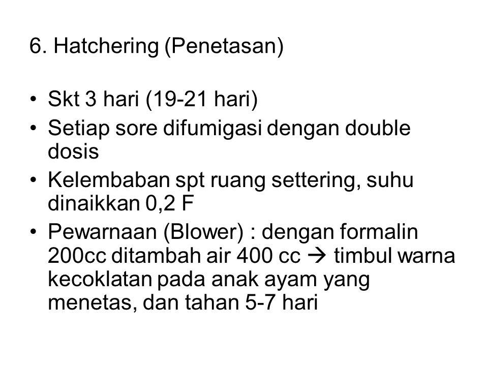 6. Hatchering (Penetasan) Skt 3 hari (19-21 hari) Setiap sore difumigasi dengan double dosis Kelembaban spt ruang settering, suhu dinaikkan 0,2 F Pewa