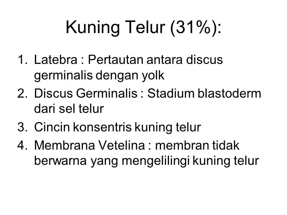 Kuning Telur (31%): 1.Latebra : Pertautan antara discus germinalis dengan yolk 2.Discus Germinalis : Stadium blastoderm dari sel telur 3.Cincin konsen
