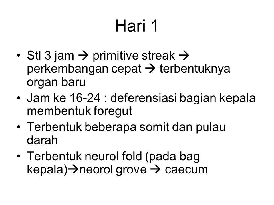 Hari 1 Stl 3 jam  primitive streak  perkembangan cepat  terbentuknya organ baru Jam ke 16-24 : deferensiasi bagian kepala membentuk foregut Terbent
