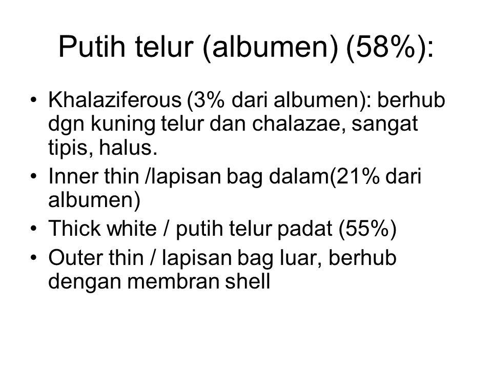 Putih telur (albumen) (58%): Khalaziferous (3% dari albumen): berhub dgn kuning telur dan chalazae, sangat tipis, halus. Inner thin /lapisan bag dalam