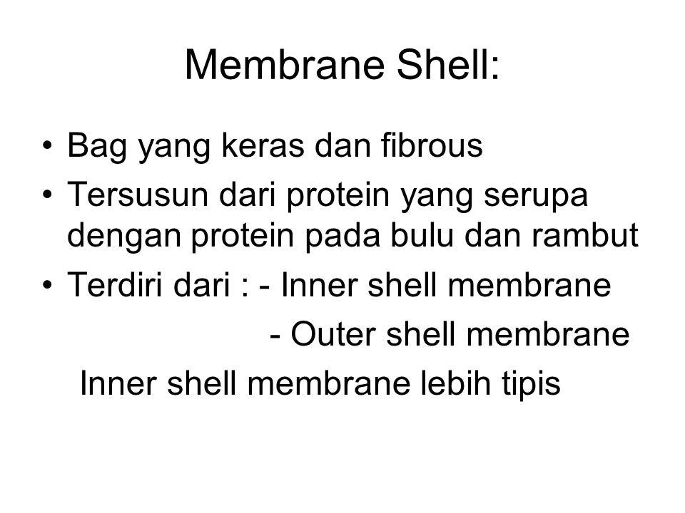 Membrane Shell: Bag yang keras dan fibrous Tersusun dari protein yang serupa dengan protein pada bulu dan rambut Terdiri dari : - Inner shell membrane