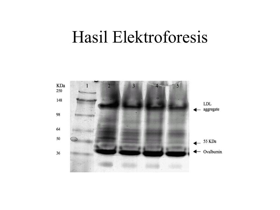 Hasil Elektroforesis