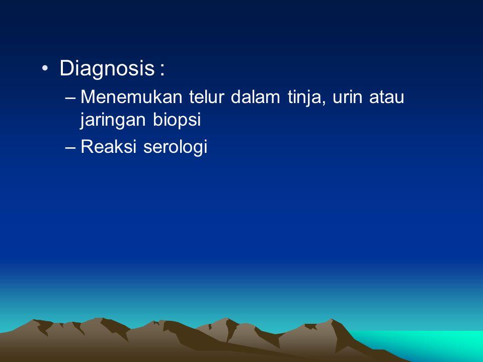 Diagnosis : –Menemukan telur dalam tinja, urin atau jaringan biopsi –Reaksi serologi