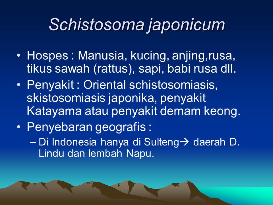 Schistosoma japonicum Hospes : Manusia, kucing, anjing,rusa, tikus sawah (rattus), sapi, babi rusa dll.