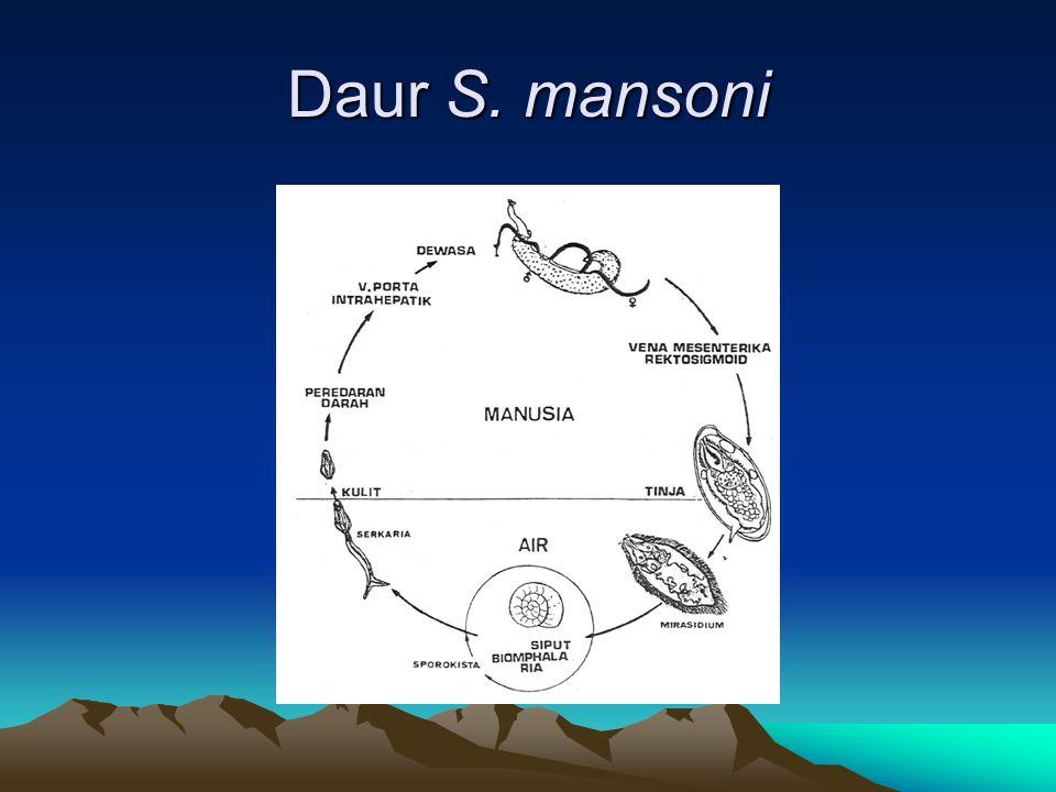 Daur S. mansoni