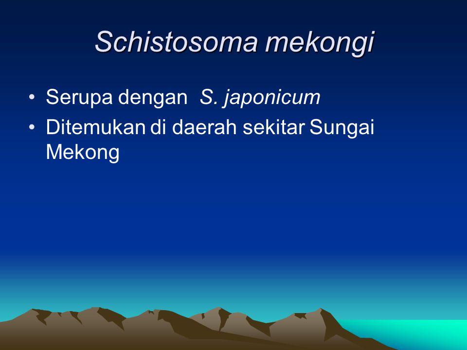 Schistosoma mekongi Serupa dengan S. japonicum Ditemukan di daerah sekitar Sungai Mekong