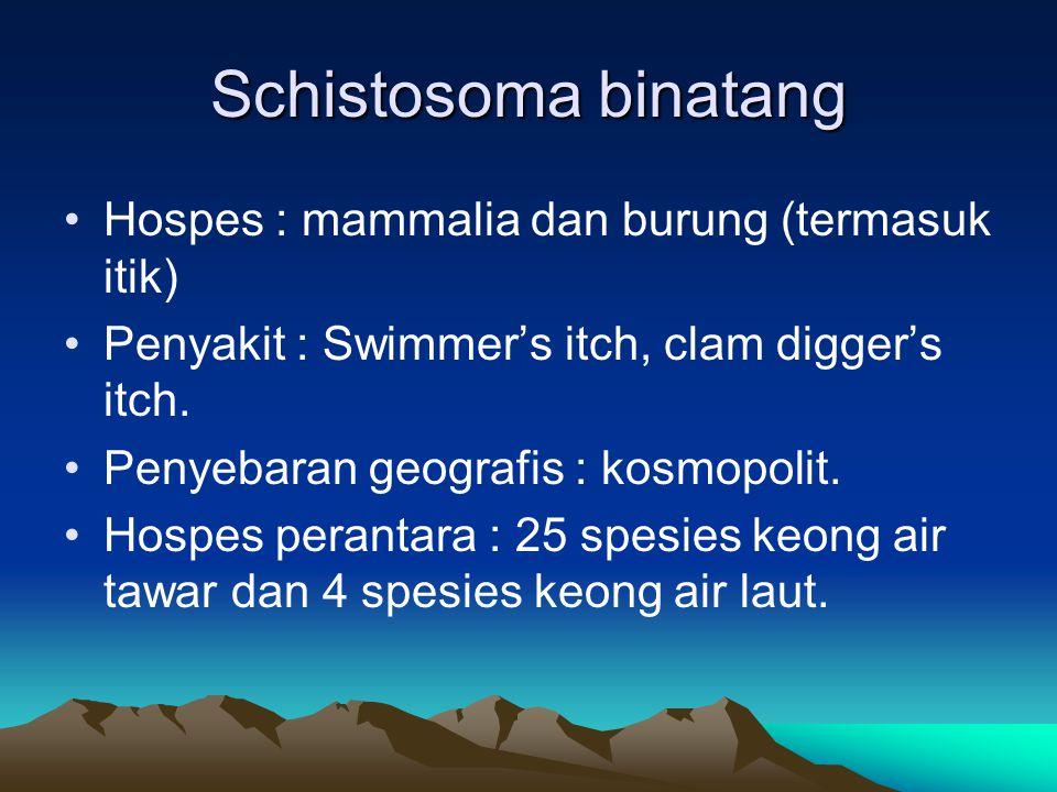 Schistosoma binatang Hospes : mammalia dan burung (termasuk itik) Penyakit : Swimmer's itch, clam digger's itch.