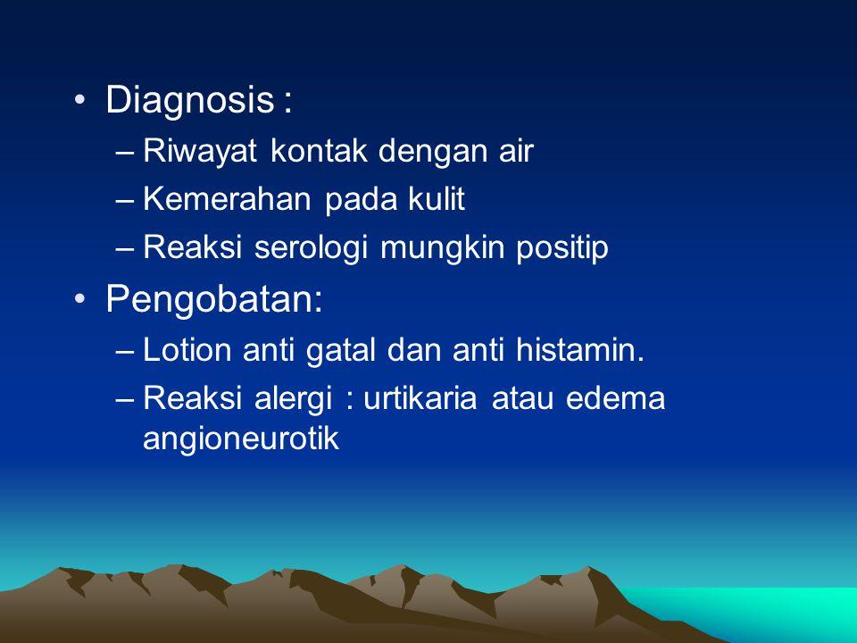 Diagnosis : –Riwayat kontak dengan air –Kemerahan pada kulit –Reaksi serologi mungkin positip Pengobatan: –Lotion anti gatal dan anti histamin.