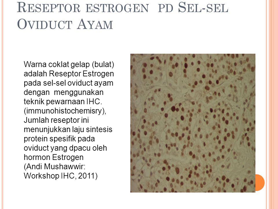 R ESEPTOR ESTROGEN PD S EL - SEL O VIDUCT A YAM Warna coklat gelap (bulat) adalah Reseptor Estrogen pada sel-sel oviduct ayam dengan menggunakan tekni