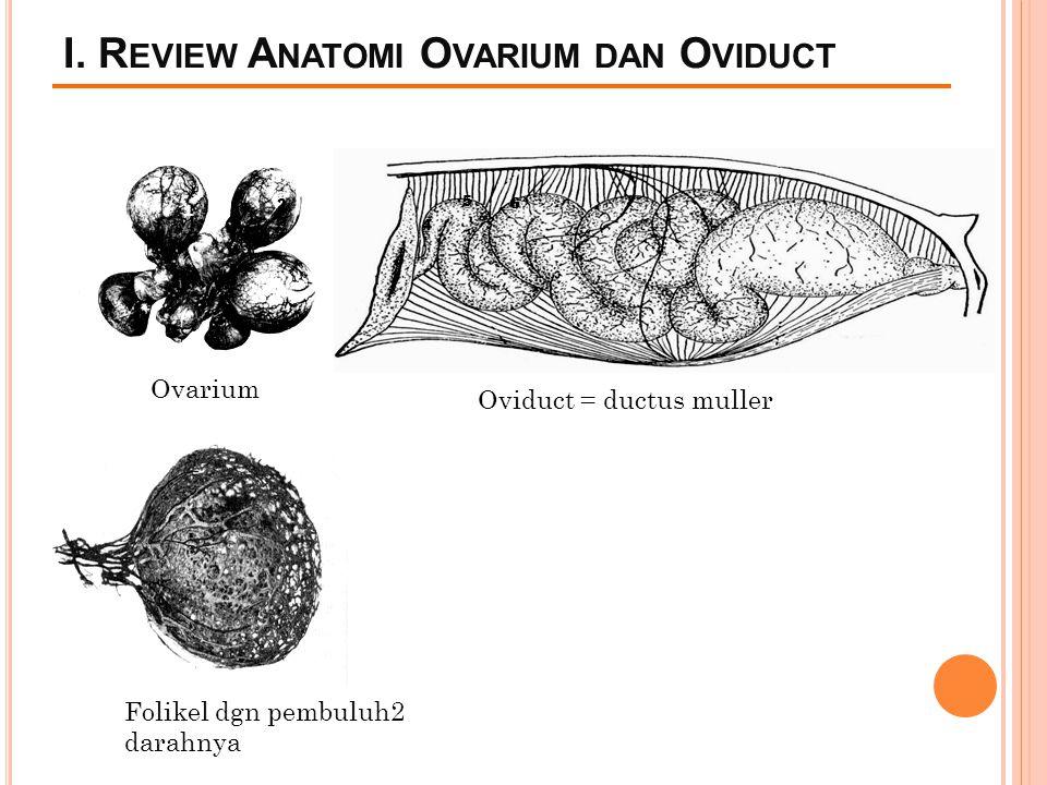 I. R EVIEW A NATOMI O VARIUM DAN O VIDUCT 1 2 4 5 6 Ovarium Oviduct = ductus muller Folikel dgn pembuluh2 darahnya