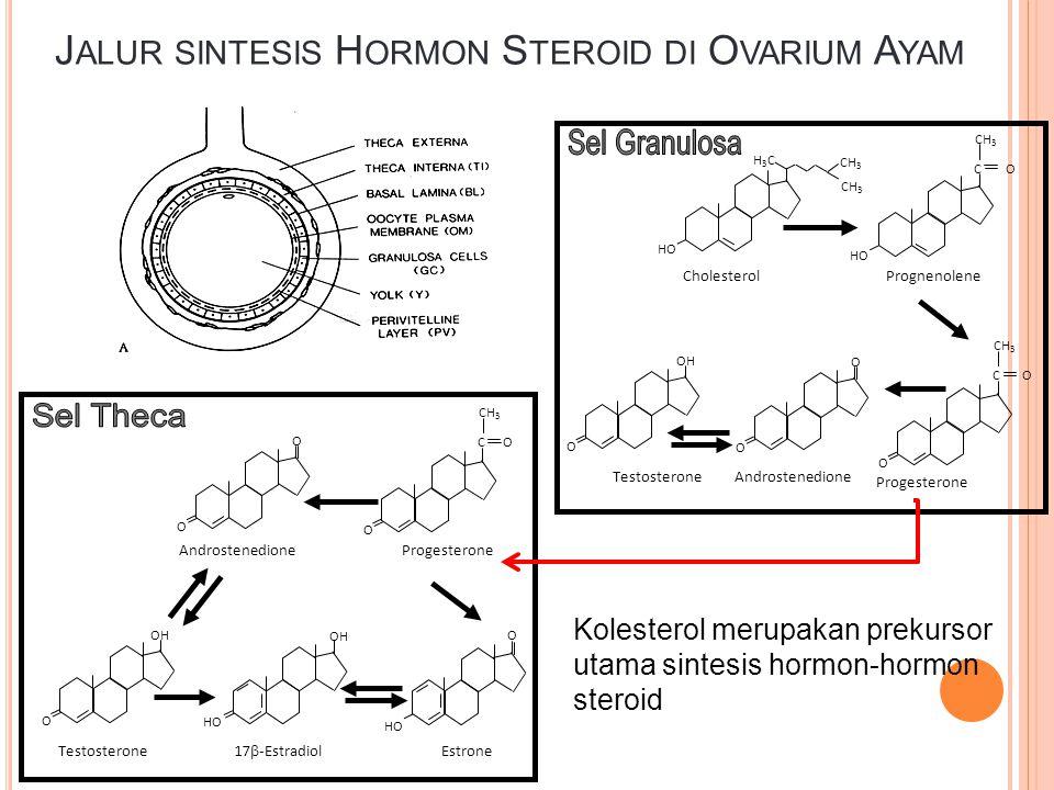J ALUR SINTESIS H ORMON S TEROID DI O VARIUM A YAM CH 3 H3CH3C HO C O CH 3 O O O O OH Cholesterol C O CH 3 HO Prognenolene Progesterone Androstenedion