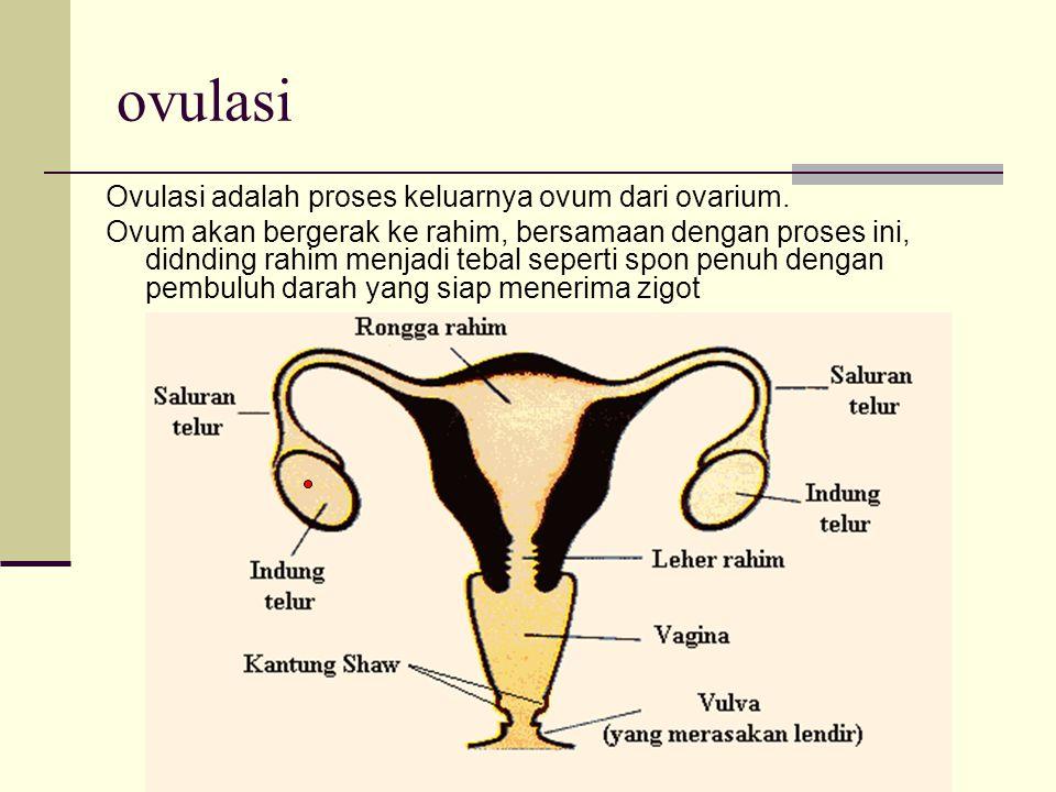 ovulasi Ovulasi adalah proses keluarnya ovum dari ovarium. Ovum akan bergerak ke rahim, bersamaan dengan proses ini, didnding rahim menjadi tebal sepe