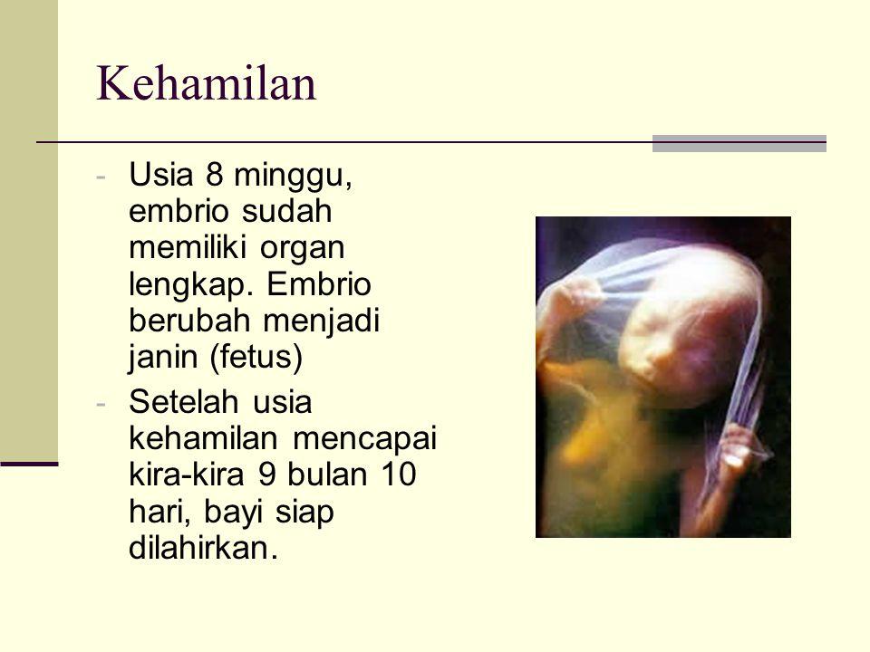 Kehamilan - Usia 8 minggu, embrio sudah memiliki organ lengkap. Embrio berubah menjadi janin (fetus) - Setelah usia kehamilan mencapai kira-kira 9 bul
