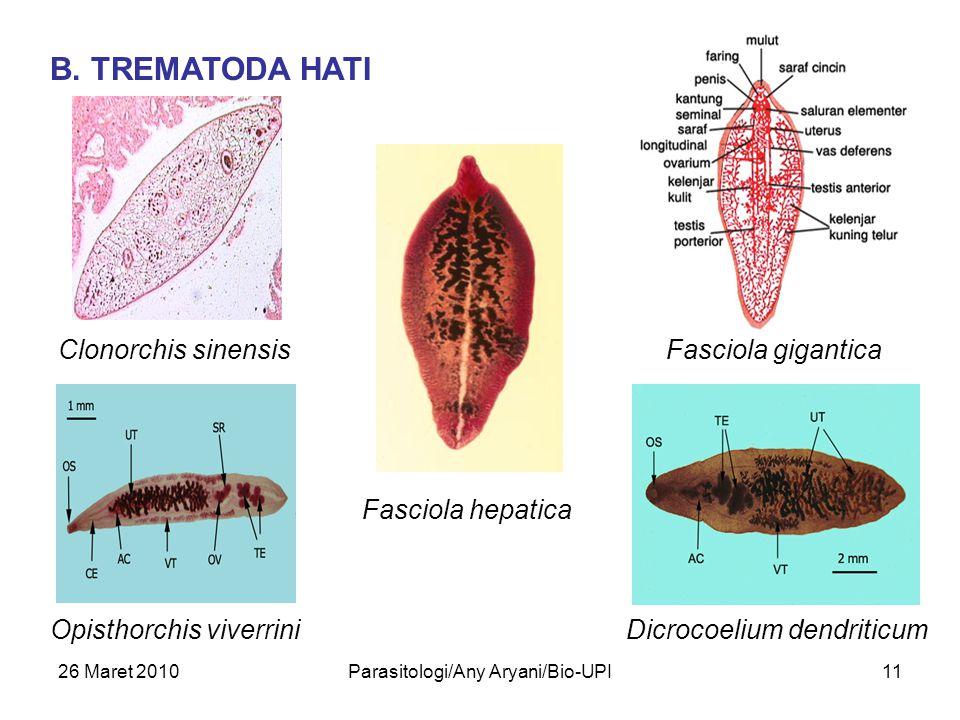 26 Maret 2010Parasitologi/Any Aryani/Bio-UPI11 B. TREMATODA HATI Clonorchis sinensis Opisthorchis viverrini Fasciola hepatica Fasciola gigantica Dicro