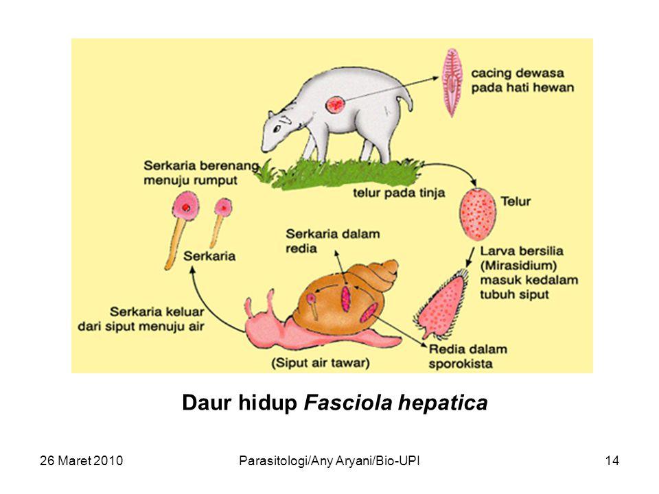 26 Maret 2010Parasitologi/Any Aryani/Bio-UPI14 Daur hidup Fasciola hepatica