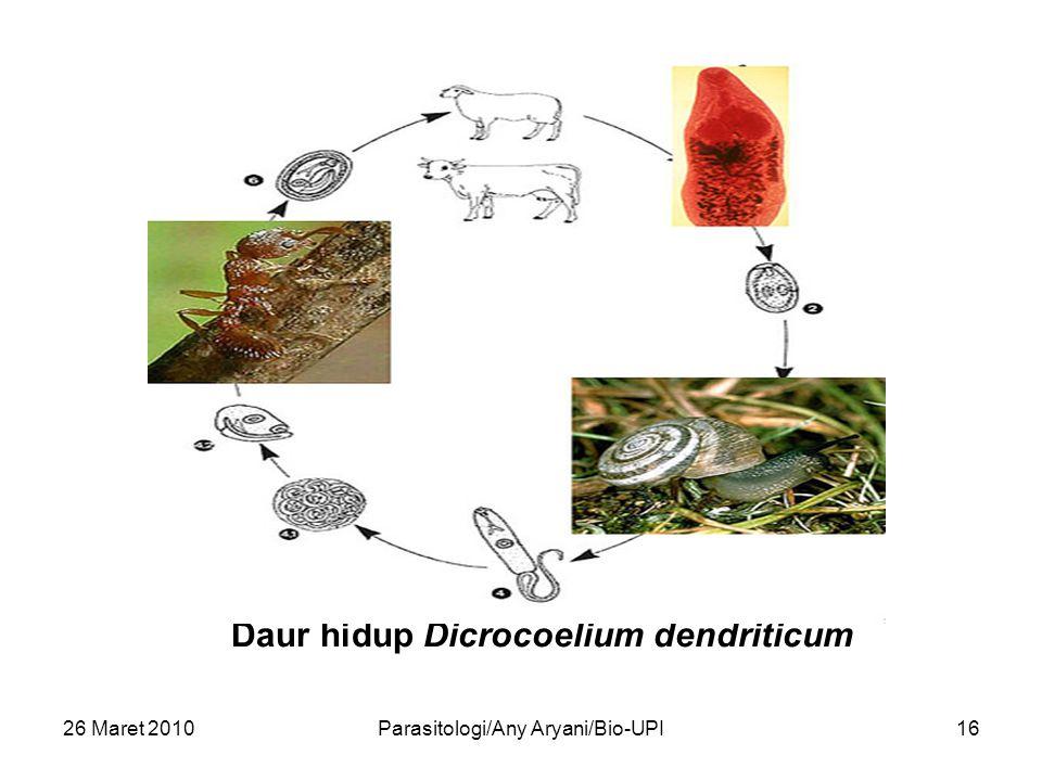 26 Maret 2010Parasitologi/Any Aryani/Bio-UPI16 Daur hidup Dicrocoelium dendriticum